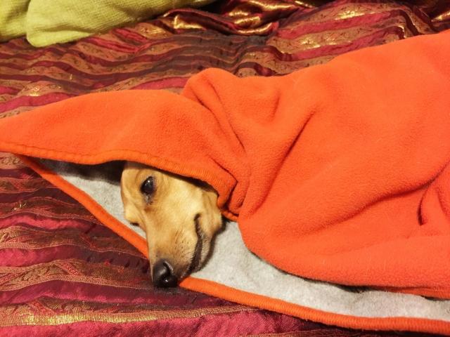 犬の毛布やブランケットはこまめに掃除